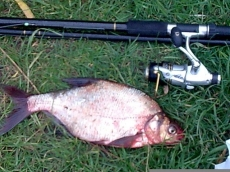 Ryby (Leszcze)