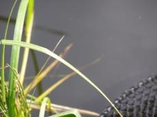 Starorzecze Odry w pobliżu Nowej Soli połowy drobnicy