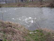 Wiosna 2007 Kozielono i Topola