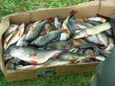 Ryby złowione w zawodach - Bukówek 2010